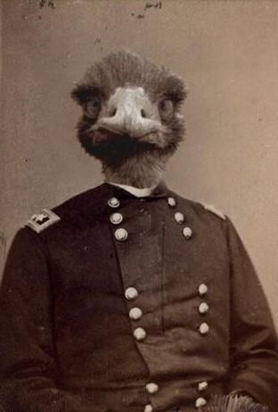 emu_commander